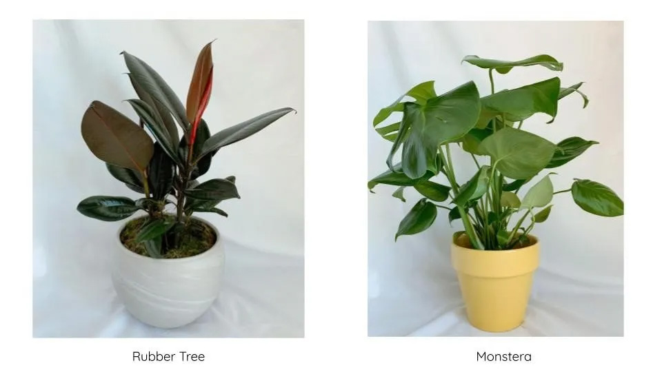 Plant selctions